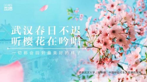 武大樱花烂漫时,邀你在QQ音乐直播线上共赏最美春光