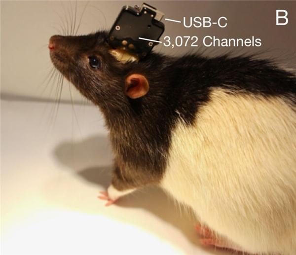 脑控万物,BrainCo发布脑机接口人类智能操作系统BrainOS
