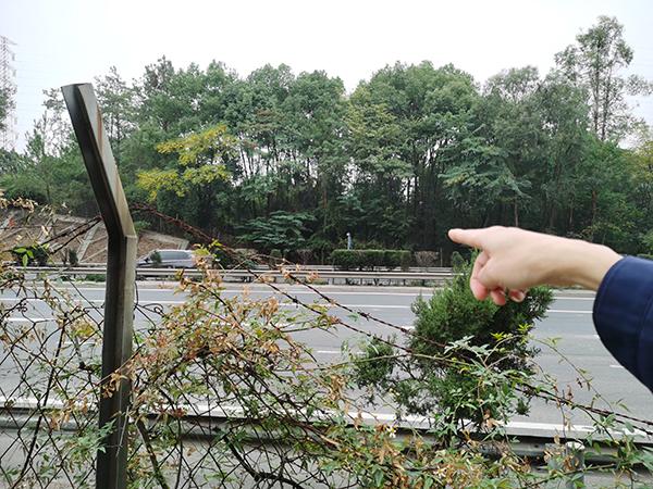郭贻灿老人死前在高速公路旁的山坡躺了两天一夜。 澎湃新闻记者 朱远祥 图